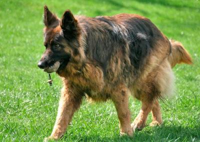 Apportieren im Gruppentraining bei Zufriedene Hunde