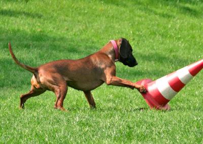Beschäftigung für Hunde in der Hundeschule Zufriedene Hunde