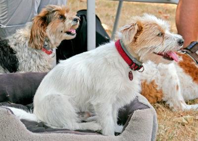Päuschen im Gruppentraining bei Zufriedene Hunde