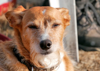 Pause im Gruppentraining Gruppentraining Hundeschule Zufriedene Hunde