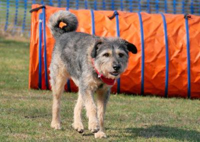 Gruppentraining bei Zufriedene Hunde