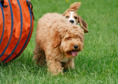 Welpenspielgruppe in der Hundeschule Zufriedene Hunde