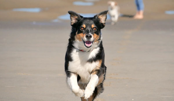 Zufriedene Hunde Longieren mit Hunden