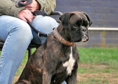 Hundeerziehung Hundeschule Rees
