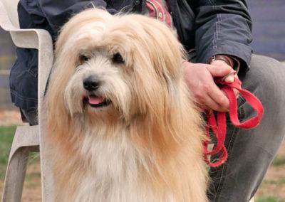 Hundeerziehung Hundeschule Emmerich