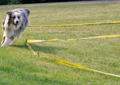 Longieren mit Hund für Fortgeschrittene