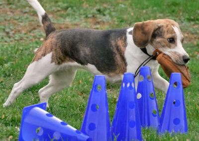 Gruppentraining Hundeschule Zufriedene Hunde