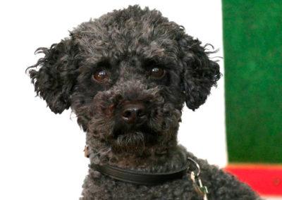 Einzeltraining Erziehung Junger Hund Zufriedene Hunde