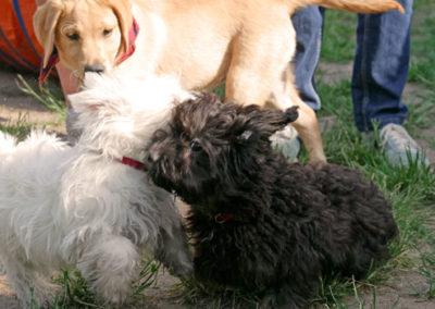 Welpenspielgruppe Zufriedene Hunde