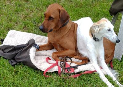 Hundeschule Zufriedene Hunde in Emmerich