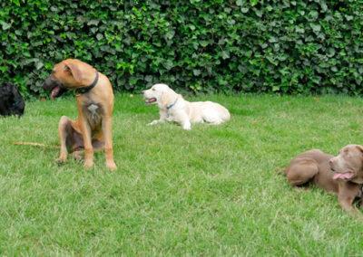 Gruppentraining bei Zufriedene Hunde in Emmerich