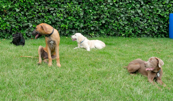 Welpenschule Welpenspielgruppe Hundeschule Zufriedene Hunde