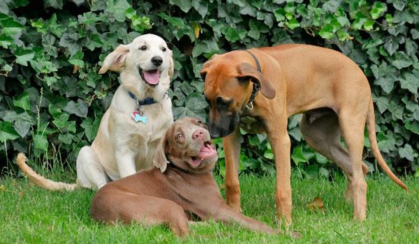 Welpenschule bei Zufriedene Hunde in Emmerich