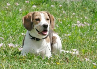 Hundeschule bei Zufriedene Hunde in Emmerich