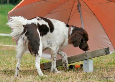 Futterbeuteltraining in der Hundeschule bei Zufriedene Hunde in Emmerich
