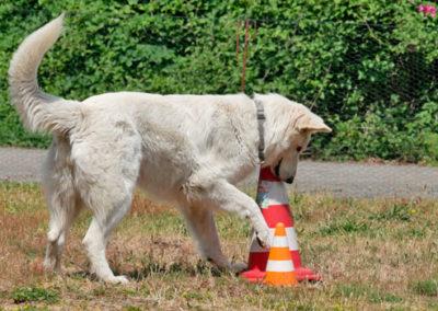 Gruppentraining in der Hundeschule bei Zufriedene Hunde in Emmerich