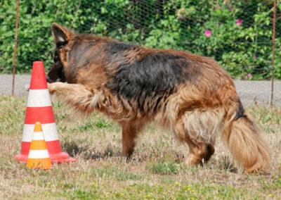 Nasenarbeit in der Hundeschule Zufriedene Hunde