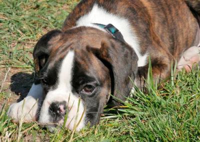 Welpenschule Hundeschule Zufriedene Hunde in Emmerich