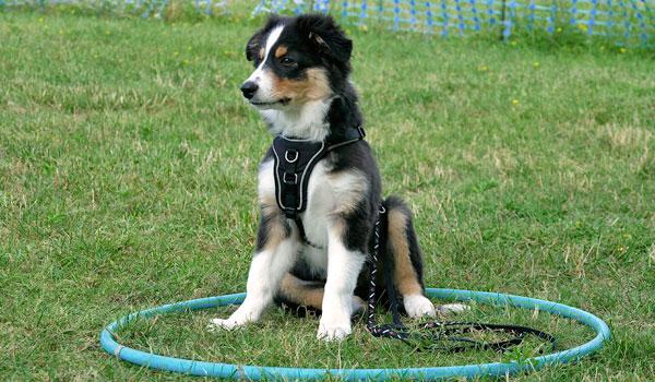 Welpenerziehung Hundeschule Zufriedene Hunde